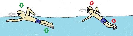 posición-respiración-natación